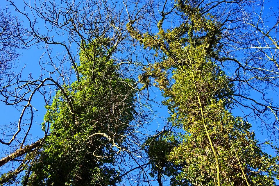 przycinanie drzew kraków